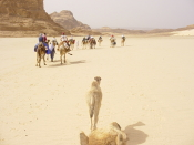 Camels (Dr Loveridge)