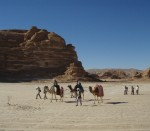 Camels in The Sinai (Emma Loveridge)